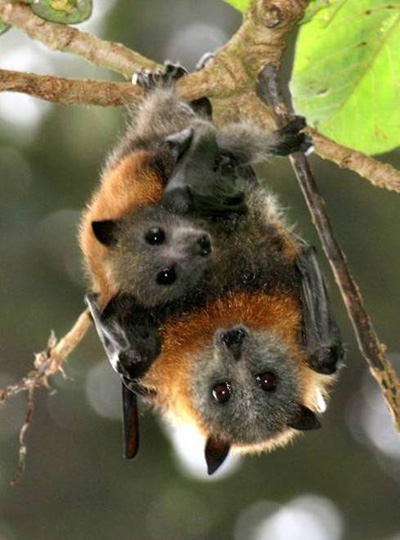 beautiful-bats1.jpg