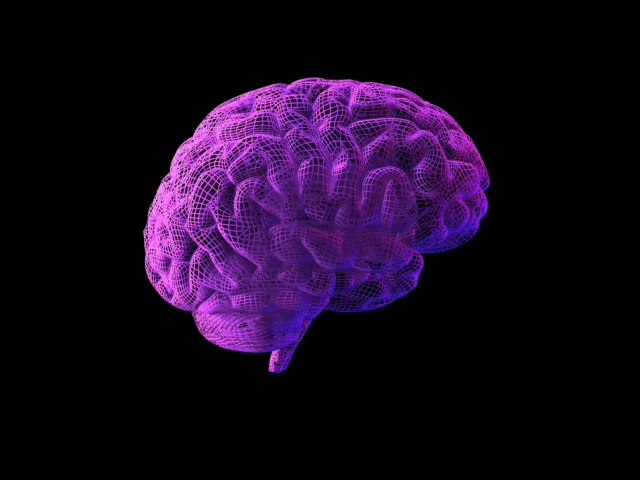 brain07wirepurp.jpg