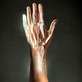human-limbs01.jpg