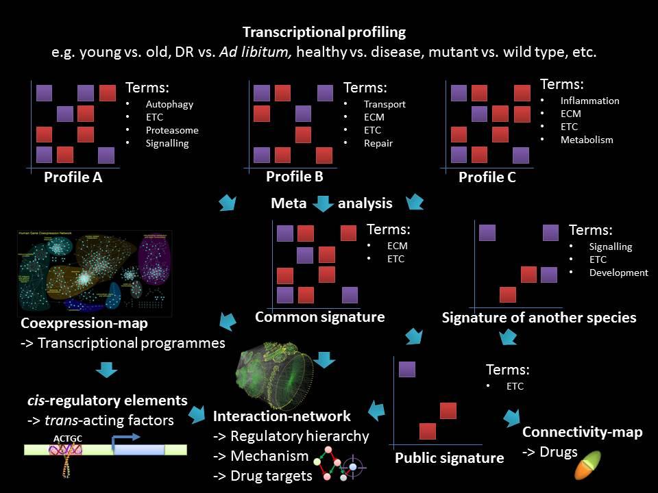 molecular_profiling.jpg