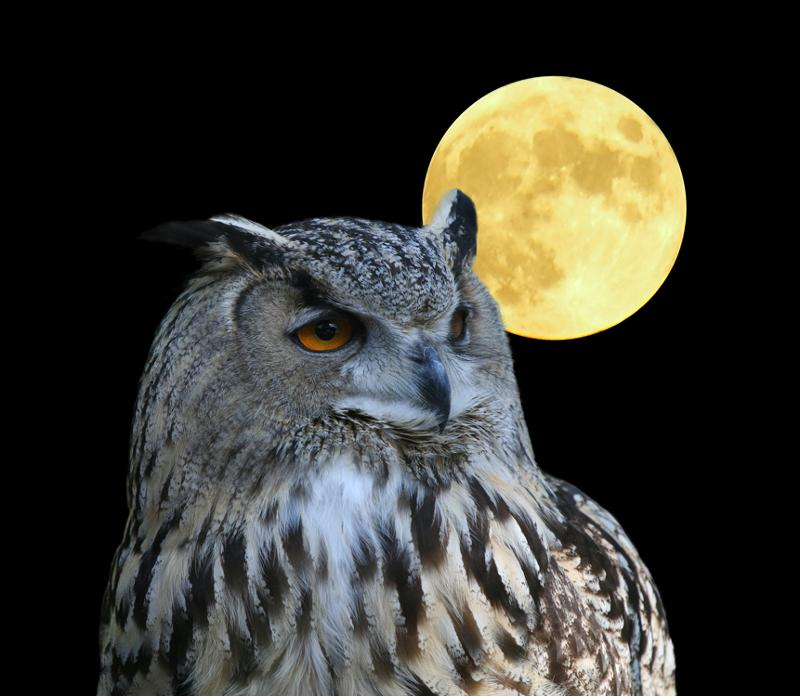 owl-moon.jpg
