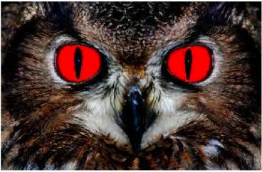owl_hell.jpg