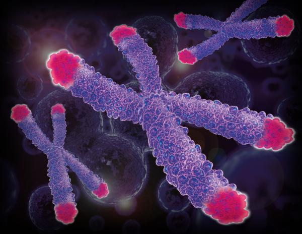 telomeres.png