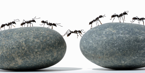Denigma: Media Image collective-intelligence-ants.png